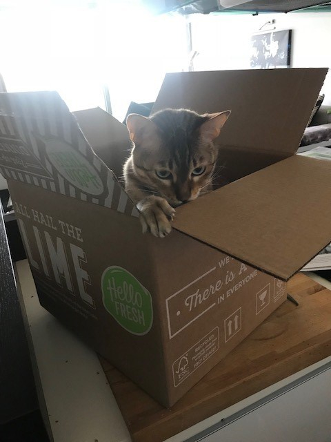 Cat not included (sorry)
